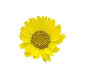 ÖUrup blommor Royaltyfria Bilder