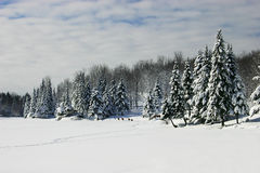över deers fryst gå för lake royaltyfri bild