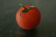 Över den mogna tomaten Fotografering för Bildbyråer