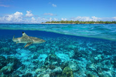 Över den under-ön och hajen undervattens- Rangiroa Arkivbilder