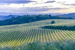 Över fälten i Montepulciano en morgon på gryning arkivbilder