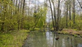 över flödande den långsamma skogfloden Arkivfoton