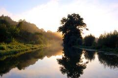 över flodsoluppgång Dimma i morgonen över floden över flodtrees Landskap Royaltyfri Fotografi
