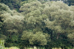 över flodtrees royaltyfri fotografi