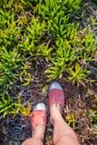 Över huvudet foto av fot på en bakgrund av exotiska växter Kvinnafotsikt från över Undersökning och att resa, turism, fritid Arkivfoto