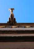 över huvudet gargoyle Royaltyfria Bilder