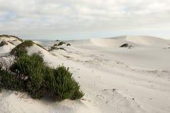 över huvudet platsskies för blå öken Arkivbilder