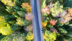 Över huvudet sikt av den lövverkträd och vägen i New England arkivfoto