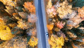 Över huvudet sikt av den lövverkträd och vägen i New England royaltyfria foton
