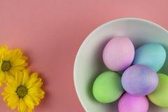 Över huvudet sikt av pastellfärgade målade easter ägg i en vit bunke med tusenskönor på rosa bakgrund royaltyfri foto