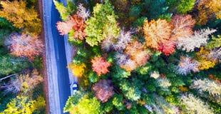 Över huvudet skogsikt av lövverksäsongen, New England Arkivfoto