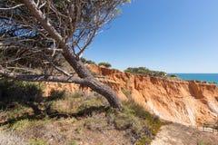 Över klipporna på Praia da Falesia, Algarve Arkivbild
