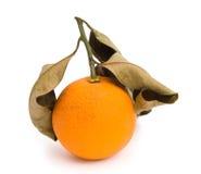 Över-mogen apelsin Arkivfoto
