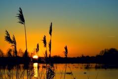 över solnedgångvåtmark Royaltyfria Bilder