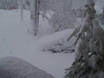 Över 14 tum snö på Oktober 28, 2008 Arkivbild