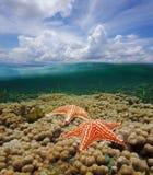 Över under-vattensjöstjärna på korall och molnig himmel Arkivfoto
