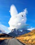 Över vägen flyger flocken av kondor Fotografering för Bildbyråer