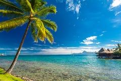 Över vattenbungalower på en tropisk ö med palmträd och VI arkivfoto