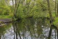 Överblick av en kanal i en skog i landsgodset Oosterbeek, Wassenaar, Nederländerna Royaltyfria Bilder