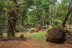 Överblick av stenar under tropiskt landskap på molnig dag nära Paraty Royaltyfria Bilder