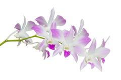 Överblickuppsättning av vita och rosa isolerade orkidéblommor Arkivbilder
