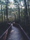 Överbrygga i skog Arkivfoton