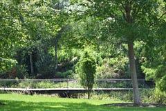 Överbrygga i skog Royaltyfri Bild