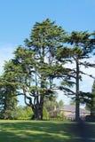 Överdimensionerade träd Arkivbild