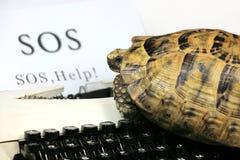 överför sos-sköldpaddan Arkivbild
