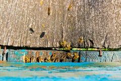 Överflöd av bin på ingången av bikupan i bikupa Arkivbild