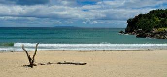 överflöd för kust- manganui för fjärd går det nya zeala Royaltyfria Foton