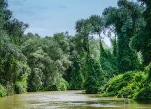 Överflödande vegetation i Donaudeltan Royaltyfria Bilder