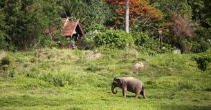 Övergående elefant Arkivfoto
