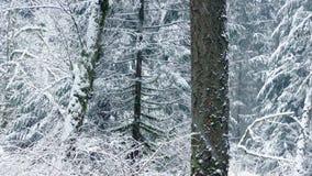 Övergående härlig vinter Forest With Snow Falling