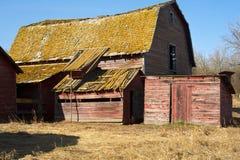 Övergav gamla ladugård och skjul i torrt gräs Arkivfoto