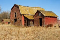Övergav gamla ladugård och skjul i torrt gräs Royaltyfri Fotografi