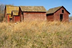 Övergav gamla ladugård och skjul i torrt gräs Royaltyfria Bilder
