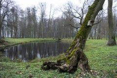 Övergav gamla parkerar med ett damm, ett däck, strömmar, forntida träd, trädgårds- bänkar i sen höst och en bladnedgång royaltyfri fotografi