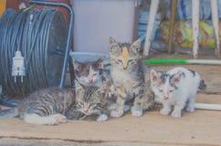 Övergav hemlösa kattungar i ladugården Arkivfoto