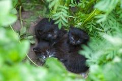 Övergav svarta kattungar, kattungar väntar på mamman, hjälper hemlösa djur arkivbilder
