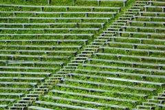 Övergav träbänkar och blekare i gräs Royaltyfria Bilder