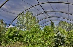 Övergav växthus Royaltyfri Foto