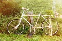 Överge cykeln i trädgården på morgontid med solljus royaltyfri fotografi
