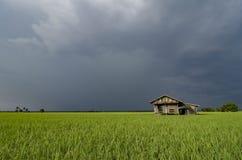 Överge trähuset som omges av det gröna risfältfältet över dramat arkivfoton