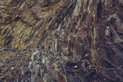 Övergett basaltvillebråd arkivfoton