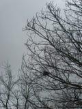 Övergett fågelrede på karga trädfilialer i regnigt tidigt vårväder med mörka Grey Sorrow Background arkivfoto
