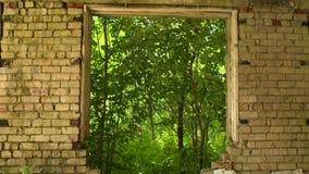 Övergett fönster för tegelstenbyggnad i natur arkivfilmer