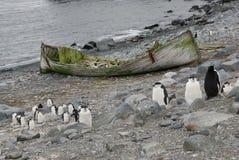 Övergett fartyg i Anarctica Royaltyfria Foton