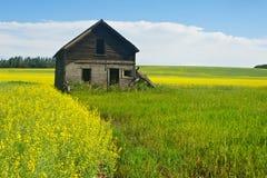 Övergett hus i canolafält Fotografering för Bildbyråer