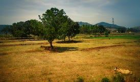 Övergett och aktuellt störa för risfält och för jord arkivbilder